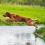 2019 WESSA Hunt Test | B Handlers Water  | 8/31/2019