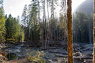 Aftermath of the landslide caused by heavy rainfall in a 2006 rainstorm - at the Ohanapecosh campground in Mount Rainier National Park, Washington State, USA