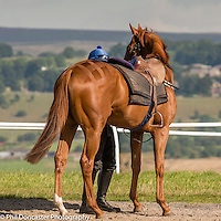 Mystery jockey at Middleham Gallops