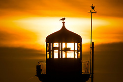 © Licensed to London News Pictures. 03/02/2019. Scarborough UK. A bird sits on top of Scarborough lighthouse as the sun shines through it this morning on the Yorkshire coast. Photo credit: Andrew McCaren/LNP