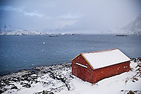 snow covered boat shed on shore of Selfjord in winter, near Fredvang, Moskenesoy, Lofoten islands, Norway