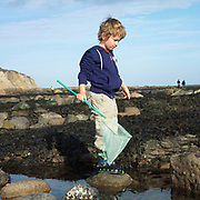 A young boy with a fishing net in his hand stands on a rock in the middle of a rock pool, Robin Hood's Bay, North Yorkshire, UK