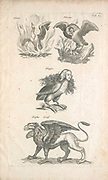 Copperplate print of a Griffin and other Mythological winged creatures 17th-century artwork. This artwork is from 'Historiae naturalis de quadrupetibus' (1657) by Polish scholar and physician John Jonston (1603-1675).