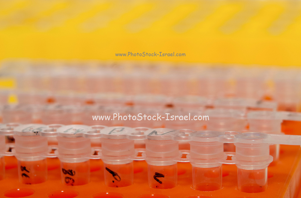 Microbiology Laboratory Cell cultures in multi-well trays
