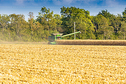 Corn or Maize is picked or harvested by a large farm implement known as a combine from a field in central Illinois