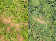Aerial photography comparing managed woodland in spring and summer. Surrey, UK.