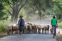 CHAUNG-U, MYANMAR - DECEMBER 01, 2016 : burmesse shepherd walking with his herd  on the road near Monywa