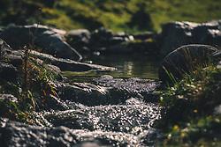 THEMENBILD - klares Gebirgswasser fließt über eine kleine Stromschnelle, aufgenommen am 13. Oktober 2019 in Saalbach Hinterglemm, Oesterreich // clear mountain water flows over a small rapids, in Saalbach Hinterglemm in Austria on 2019/10/13. EXPA Pictures © 2019, PhotoCredit: EXPA/Stefanie Oberhauser