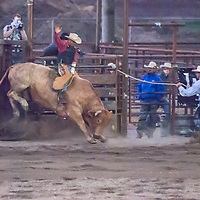 Bull riders compete in the 2011 Bozeman Stampede in Bozeman, Montana.