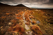 Pilgrim's Way Llyn Trail, Iron Age route - A Life path for centuries. <br /> <br /> The largest iron age settlement / fortress in Britain, Tre'r Ceiri covers the top of a high Welsh mountain, so high that clouds often pass lower than the summit as here. The highest peak on this peninsula hides behind the mist in the background.