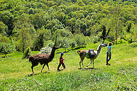 France. Ariege. La ferme des lamas de Laurence et Edouardo. //  France. Ariege. Lama farm