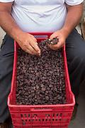 Raisins in a red basket, Pantelleria, Sicily, Italy.