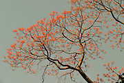 Tree branch with pink flowers.