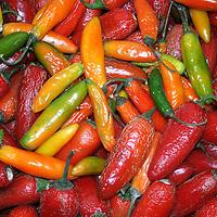Mexico, Guanajuato, San Miguel de Allende. Red Chile Peppers.