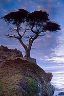 A lone cypress tree near Carmel on the Monterey Peninsula, Monterey County, California