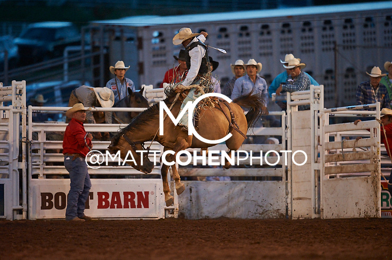 Saddle bronc rider Jade Blackwell of Rapid City, SD rides Top Shelf at the Pikes Peak or Bust Rodeo in Colorado Springs, CO.<br /> <br /> <br /> UNEDITED LOW-RES PREVIEW<br /> <br /> <br /> File shown may be an unedited low resolution version used as a proof only. All prints are 100% guaranteed for quality. Sizes 8x10+ come with a version for personal social media. I am currently not selling downloads for commercial/brand use.