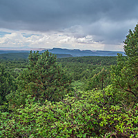 Cedar forests grown at the base of Bears Ears Buttes in what remains of  Bears Ears National Monument after it was downsized by the Trump administration in 2017.