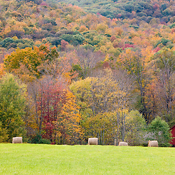 Hay bales and fall foliage, on a farm in Williamstown, Massachusetts.