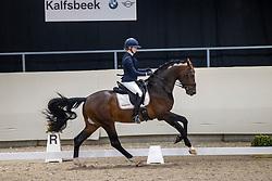 Galiart Jesslin, King van het Haarbosch<br /> KWPN Hengstenkeuring 2021<br /> © Hippo Foto - Dirk Caremans<br />  06/02/2021