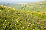 View over Pewsey Vale from chalk scarp slope of Milk Hill, Alton Barnes and Alton Priors, Wiltshire, England, UK