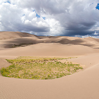 Small pockets of sunflowers hide among the sand dunes in Colorado. © John McBrayer