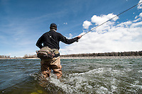 John Shepard, of Jackson, casts for whitefish while competing in the Whitefish Derby on Saturday near the Wilson Bridge over the Snake River.