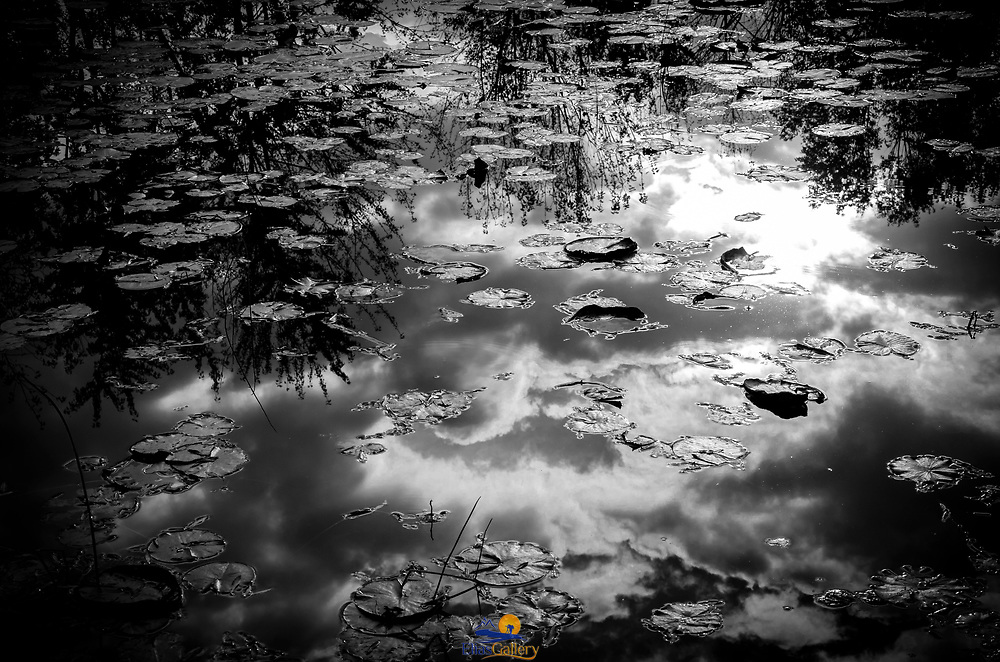 Clouds reflecting on pond. Montreal, Canada.