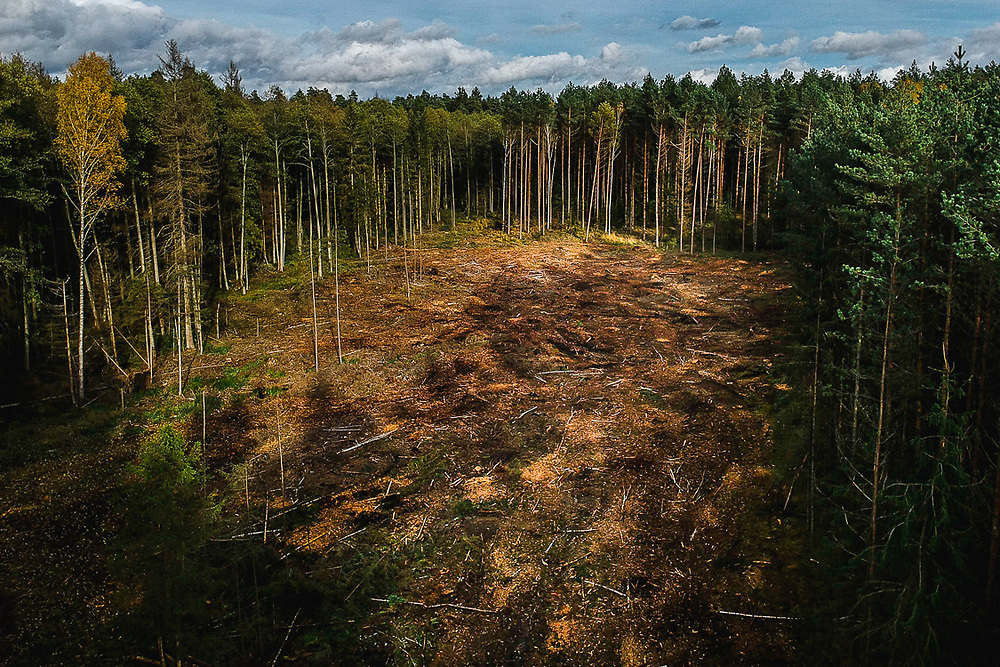 Aftermath of logging inside the forest. Often works are in deep woods where it can't be easily spotted by tourists.