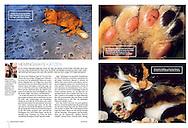 Publication: NATUR + KOSMOS (Germany) September 2011,  Photography by Heidi & Hans-Jürgen Koch/heidihanskoch.com