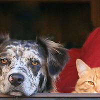 Sydney and Ned on neighborhood watch.