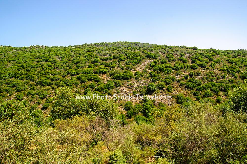 landscape of Yehiam stream western Upper Galilee, Israel,