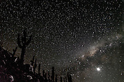 Stars and the Milky way, Valley of the Cactus, Guathin Gorge, Atacama Desert; Chile, South America
