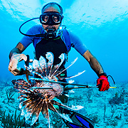 Commercial fisherman Andres Maldonado cuts the venomous spines off a lionfish after spearing the invasive species off Cabo Rojo, Puerto Rico. He noticed drastic and obvious declines in fish numbers and habitat availbale after Hurricane Maria in 2017 which put many other commercial fisherman out of business. Lionfish eat native fish and contribute to fish declines. Image release available.