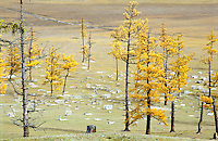 No fences, burial ground on the steppe near to Hatgal Somm, Mongolia.