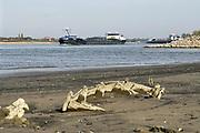 Nederland, the netherlands, Nijmegen, 19-10-2018 Binnenvaartschepen varen in de Waal langs de drooggevallen oever . Door de aanhoudende droogte staat het water in de rijn, ijssel en waal extreem laag . Laagterecord en de laagste officiele stand ooit bij Lobith gemeten . Schepen moeten minder lading innemen om niet te diep te komen . Hierdoor is het drukker in de smallere vaargeul . Door te weinig regenval in het stroomgebied van de rijn is het record verbroken . Het wrak van een klein houten bootje is nog niet eerder zo droog komen te liggen. Foto: Flip Franssen