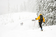 Crosscountry skiers in a snowstorm along the Mount Tahoma Trails, Ashford, Washington.