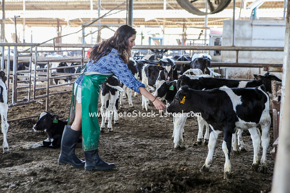 Teen girl cares for the calves born on a dairy farm