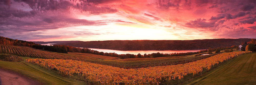 Keuka Lake, Finger Lakes, NY.  Opening line:  The sky was the color of Zinfandel.  I had a bit of despair seeing the overcast sky as drove the road above the lake to this little spot overlooking the vineyards.  But there was still a gap to the east, and I hoped it wouldn't close before sunrise.  When the sky began lighting up, I the underside of the storm creeping eastward was lit with ared/purple glow that was unearthly.  Even the autumn tinted grape vines glowed with the reflection from above and ahead.  Strangely, the sky moved quickly but the wind was still at ground level, and the scene unfolded eerily before me.  The sun breached the treeline and became too bright for shooting, and I watched awhile, then ran as the first rain started falling.  I don't know what kind of wine the rows in front of me produced, but if I wanted a drink this morning, it would have been Zinfandel.
