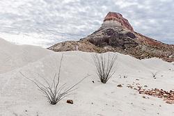 Ocotillo and Cerro Castelon, Big Bend National Park, Texas, USA.