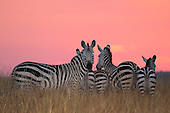 Africa - Stock Images