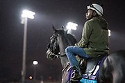November 1-3, 2018: Breeders' Cup Horse Racing World Championships. Forty Under