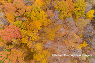 63876-02315 Aerial view of fall color trees Stephen A. Forbes State Park Marion Co. IL