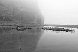 Birds in fog at small pond at Skoganupur, Iceland - Þoka og fuglalíf við Skóganúp