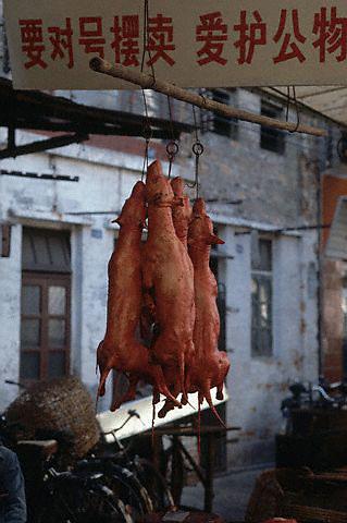 Guangzhou, China --- Skinned dogs hang at the Qingping Market in Guangzhou, China. --- Image by © Owen Franken/CORBIS