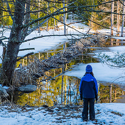 A girl looks at a beaver dam on Crommet Creek in the Society for the Protection of New Hampshire Forest's Dame Forest in Durham, New Hampshire. Winter.