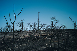 July 26, 2018 - Mati, Athens, Greece - Post fire at Mati, Attica. A huge fire left more than 74 dead and missing people are still wanted by families. (Credit Image: © Pierre Berthuel via ZUMA Press)