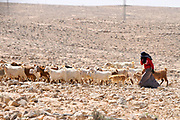 Israel, Negev desert, Mitzpe Ramon, female Bedouin shepherd and her herd of sheep