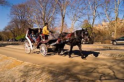 New York City, New York: Horse carriage ride in Central Park  .Photo #: ny271-14877  .Photo copyright Lee Foster, www.fostertravel.com, lee@fostertravel.com, 510-549-2202.
