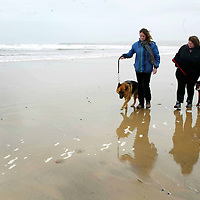 Eileen Battersby with Edel Hassett and thier dogs Sam and Becca from Lahinch pictured walking along the beach in Lahinch on Wednesday. There is plans not to allow people to walk thier dogs on the beaches in Clare this Summer. Pic. Brian Arthur/ Press 22.<br /> See Story by Gordan Deegan.