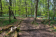 Footpath through Stoke Woods, Bicester, Oxfordshire owned by the Woodland Trust